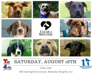 """Clear the Shelters"" Adoption Event @ Home for Good Dog Rescue 