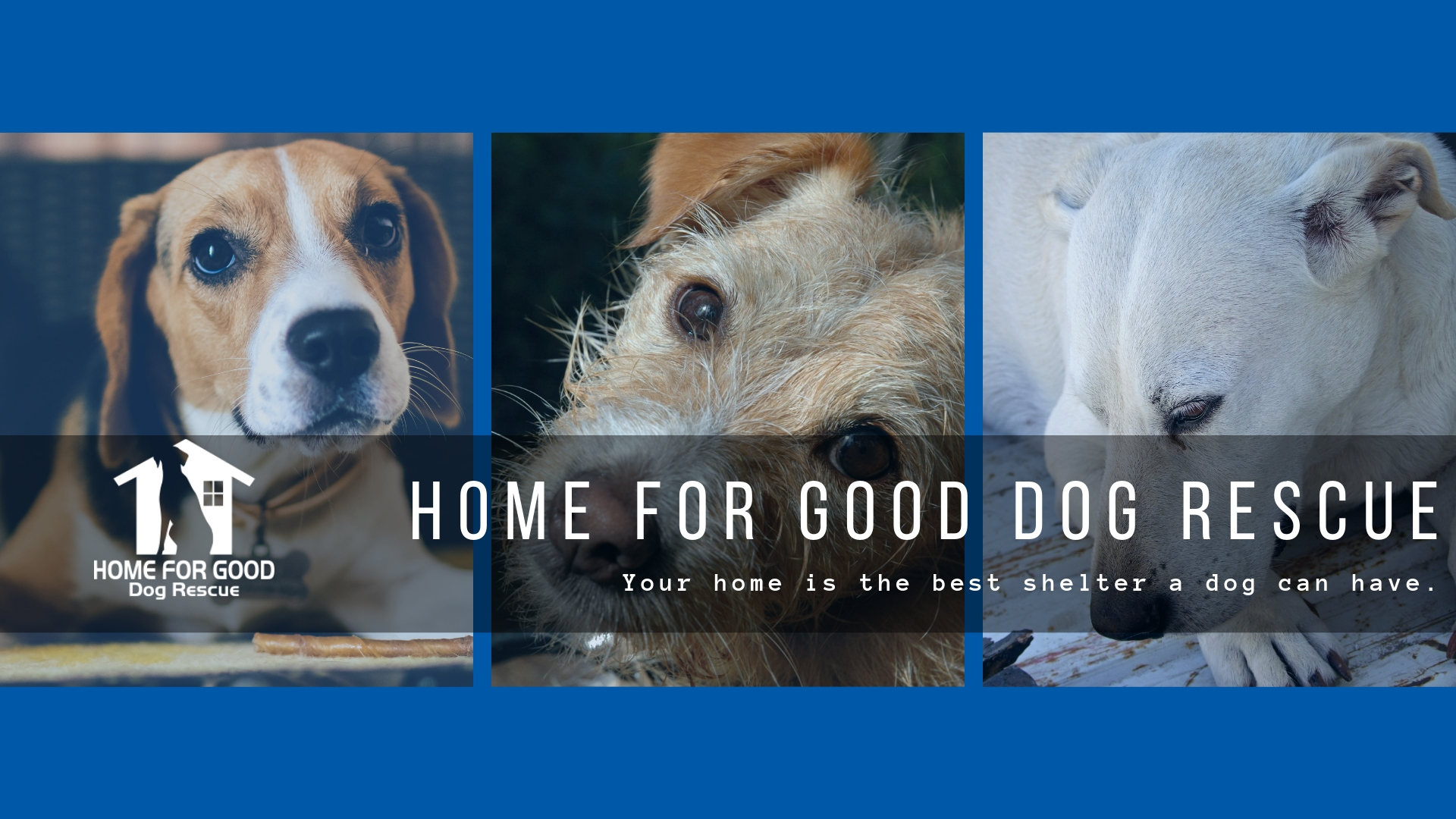Home For Good Dogs | Home For Good Dogs