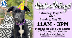 ADOPT-A-PALOOZA WEEKEND! 🎉 @ Home for Good Dog Rescue