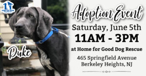 Adoption Event at HFGDR! @ Home for Good Dog Rescue