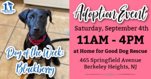 @ Home for Good Dog Rescue