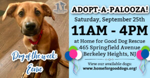 ADOPT-A-PALOOZA Adoption Event at HFGDR! 🥳🐾 @ Home for Good Dog Rescue