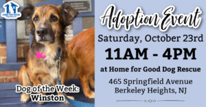 Adoption Event at HFGDR! 🐾 @ Home for Good Dog Rescue